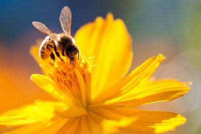 蜂のスピリチュアルな8つの意味とは?行動・場所別によるメッセージの6つの意味と合わせてヒーリング経験のある筆者が解説