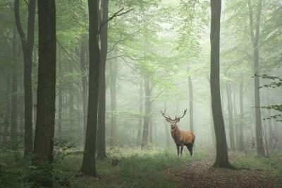 鹿が縁起がいい2つの理由とは?4つの幸運と世界各国の鹿の言い伝えをスピリチュアルな世界に詳しい筆者が解説!