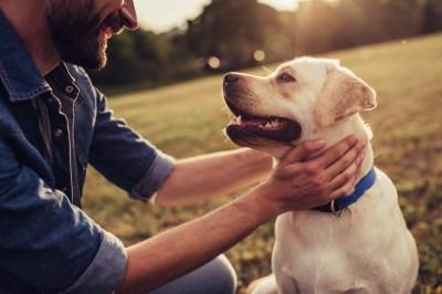 犬の夢の22個の意味!子犬・茶色・なつくなど状況別に夢占いに慣れ親しんできた筆者が解説!