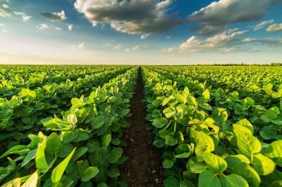 畑の夢の5つの意味とは?行動別による6つの意味と育てていた野菜の4つの意味を合わせてヒーリング経験のある筆者が解説