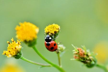 縁起の良い虫5選!てんとう虫・トンボなど理由や象徴するメッセージを虫好きな筆者が解説