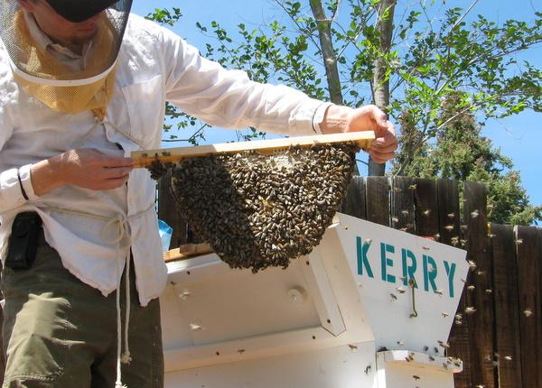 Alex, examining the Kerry Hive