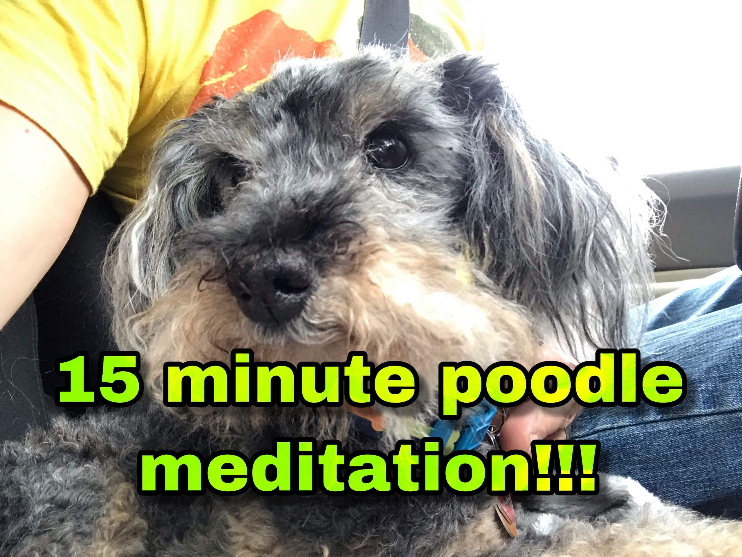 15 minute poodle meditation video