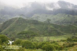 haputale plantaciones de té
