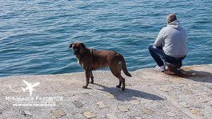 Pescador en la Bahía