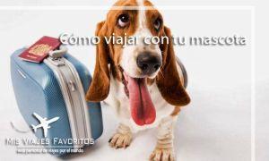 mascota viajera