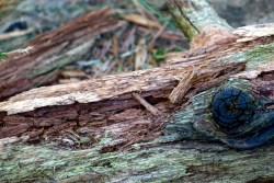 Einer der wichtigsten Bestandteile eines intakten Waldes ist das Totholz
