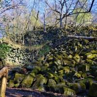 Basaltprismenwand auf dem Naturlehrpfad Gangolfsberg im Biospärenreservat Rhön
