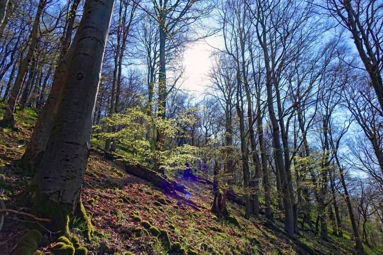 Buchenwald auf dem Naturlehrpfad Gangolfsberg im Biosphärenreservat Rhön