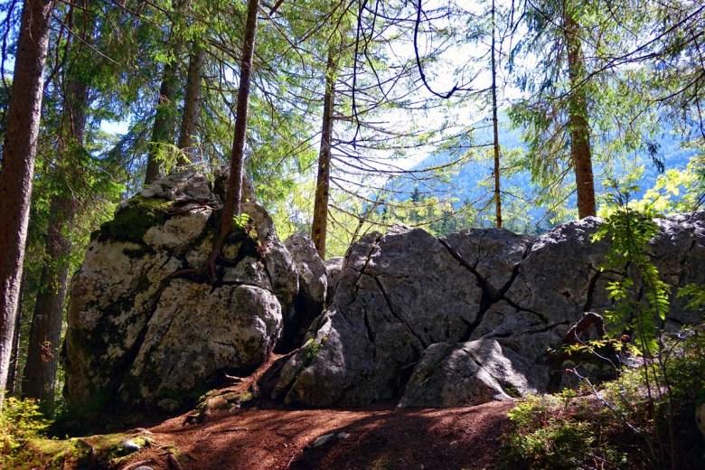 Bäume wachsen aus den Felsen im Zauberwald empor wie skurrile Bonsais