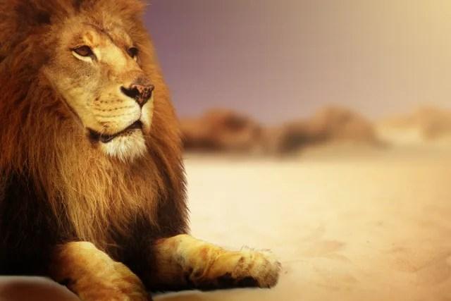 ライオンキングのアニメと映画の声優の違いは?日本語版と英語版も併せて紹介!