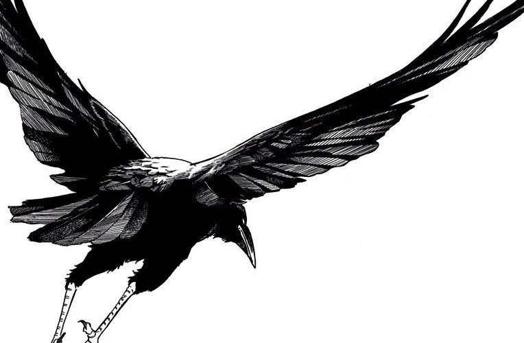 鬼滅の刃「カラス」の声優!鎹鴉の詳細についてもご紹介