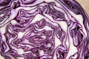 紫キャベツ断面