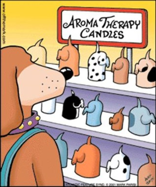 Dog scents