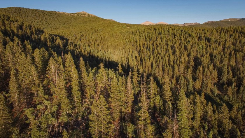 drone footage of forest in Colorado photo 1