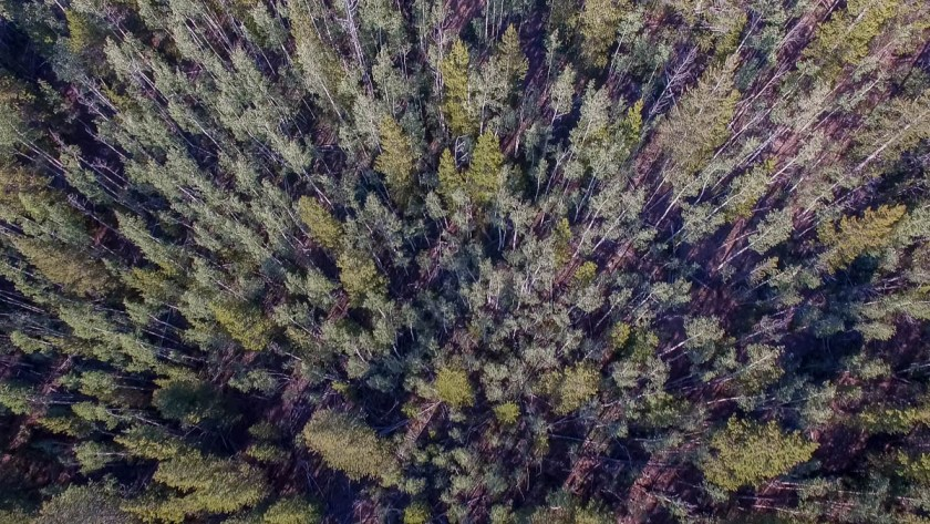drone footage of forest in Colorado photo 2