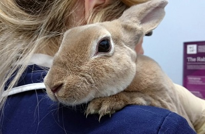 Have Rabbits?  Be Aware of Rabbit Hemorrhagic Disease