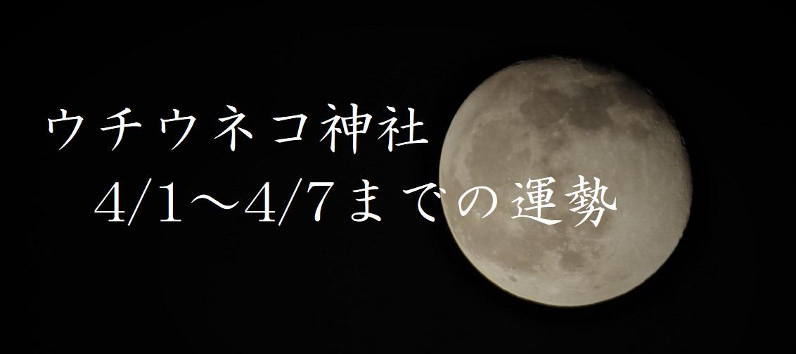 【ウチウネコ神社】4/1~4/7までの運勢