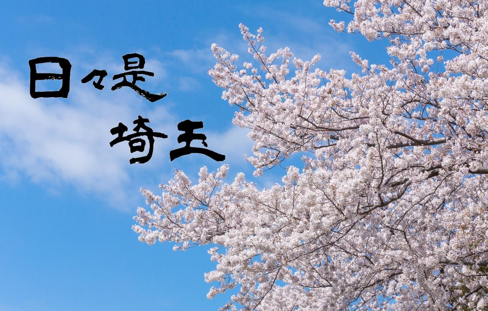 【日々是埼玉 2019/3/16】開花は去年よりもやや遅め?埼玉県内の桜事情in2019