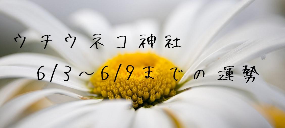【ウチウネコ神社】6/3~6/9までの運勢