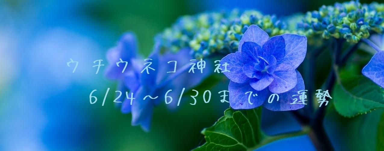 【ウチウネコ神社】6/24~6/30までの運勢