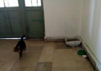 Taskisla kitty's stuff