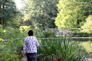 Walking at Leonard Buck Gardens, Far Hills, NJ