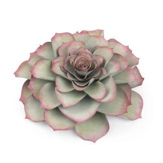 Framelits Die Large Succulent, Sizzix