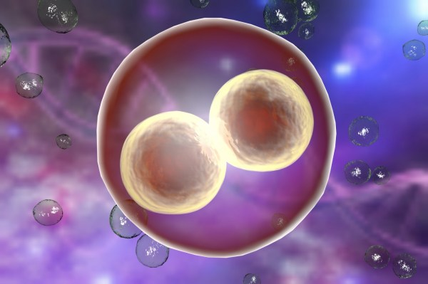 Leigh Syndrome Mutations Affect Embryonic