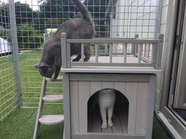 Kattenpension Mitoe