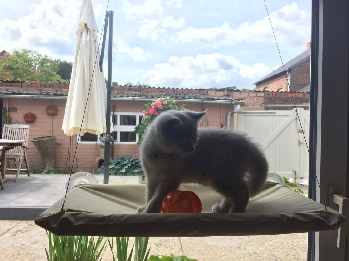 Kattenpension Mitoe te Sint-Truiden