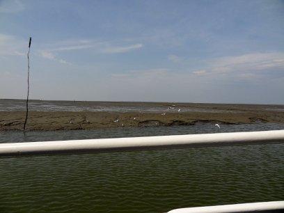 Blick vom Boot auf das Watt.