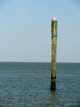 Möwe am Meer auf einem Holzpfosten.