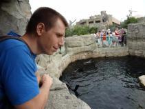Jonas beobachtet die Seelöwen beim Chillen.