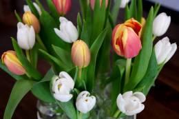 Meine Lieblings-Tulpen sind die Rot-Gelben.