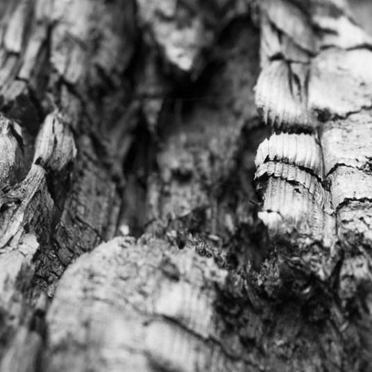 wood-432571_1280