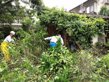 立木の伐採と除草