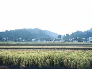 稲刈りシーズン2