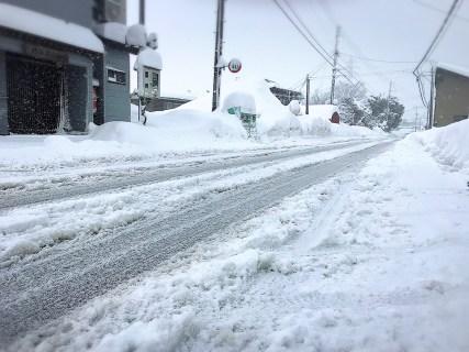 今日も雪降りですね!