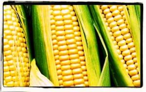 El origen del maíz