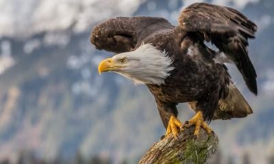 Simbología del águila