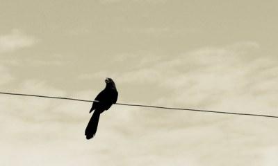Simbología del cuervo