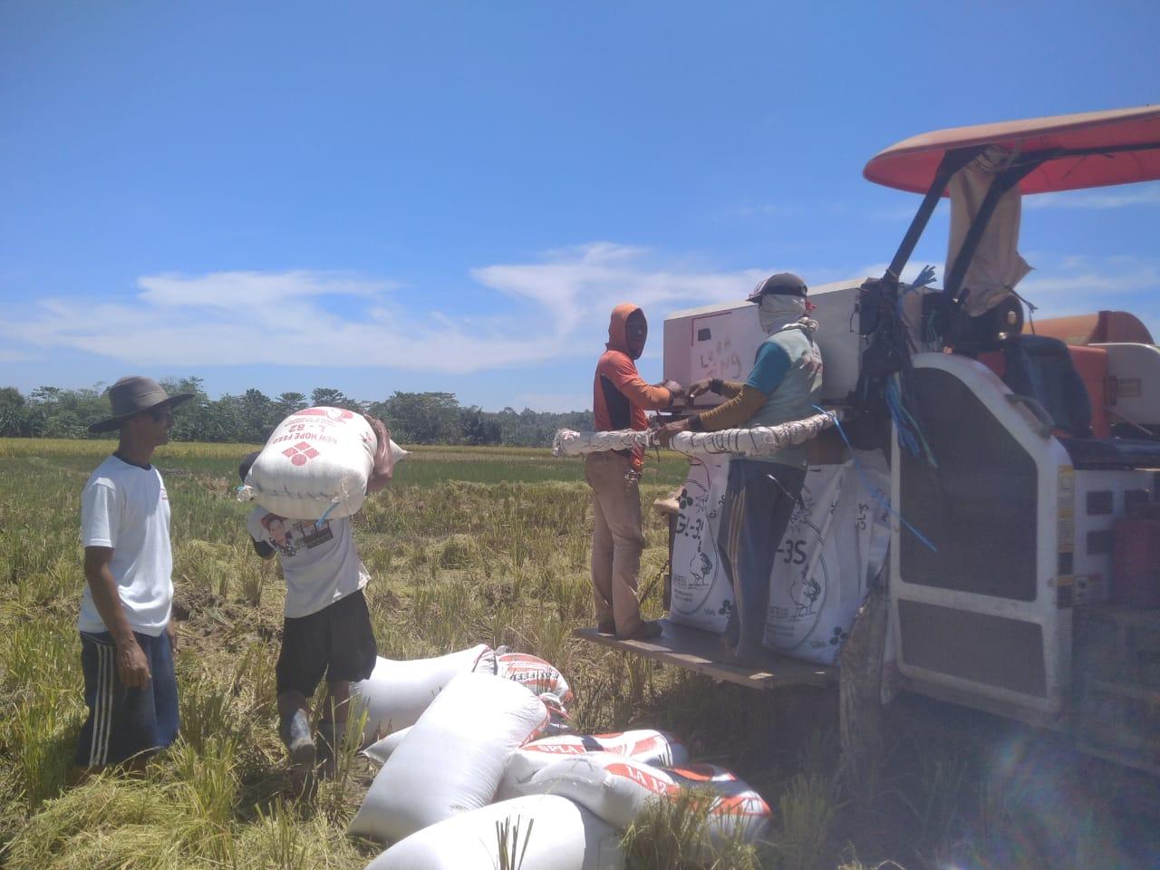 Gambar Panen Gunakan Alat Pinjaman dari Pemprov Banten, Petani Pandeglang Tekan Biaya Produksi 1