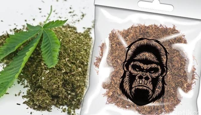 Gambar Apes dah.. Mau Jemput Pesanan Tembako Gorila, Eh Keburu Dicokok Polisi 17