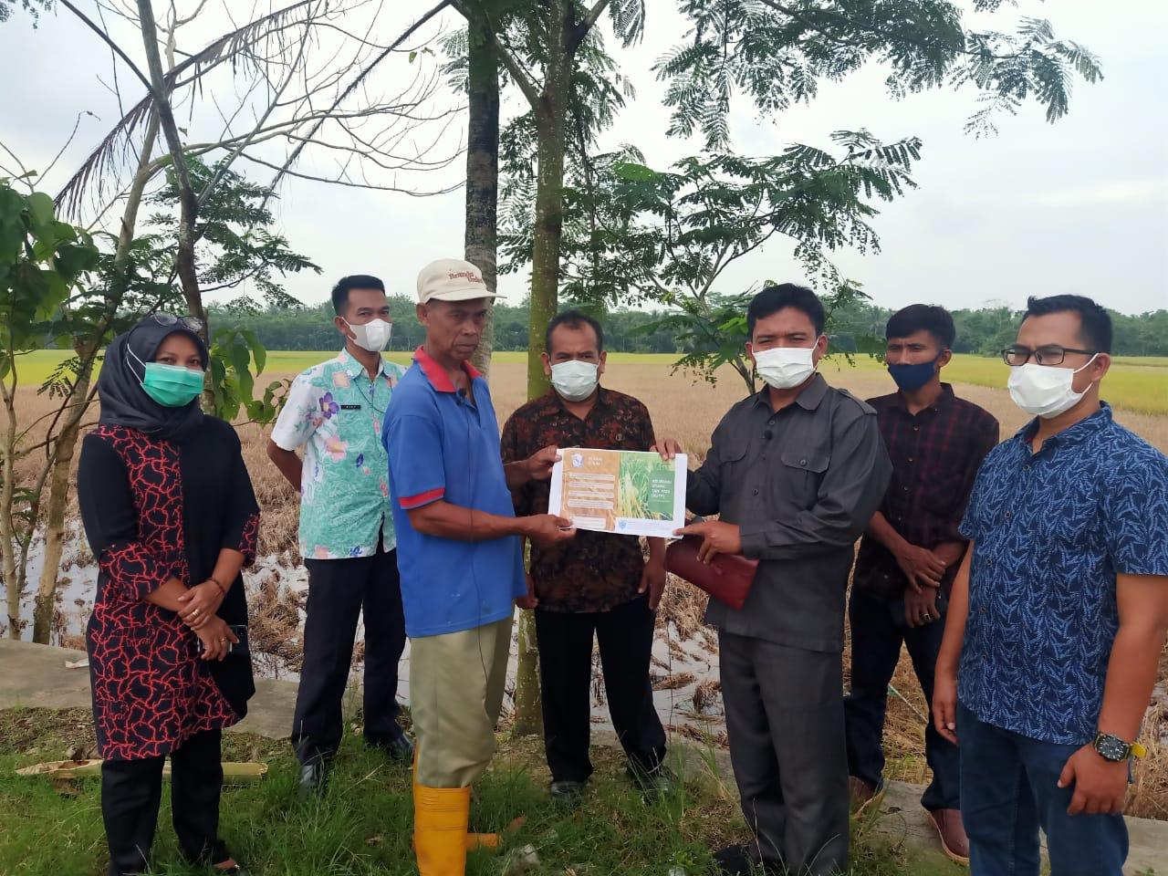 Gambar Ketua Komisi II DPRD Pandeglang Tinjau Lokasi Sawah Terserang Hama di Munjul 1