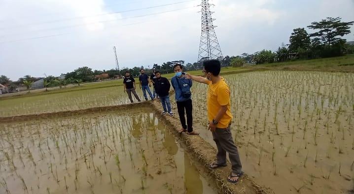 Gambar Diduga Aliran Air tidak Ngalir Petani Mengeluh Bertahun - tahun Sawah di Kampung Sentral Terendam Bajir 11