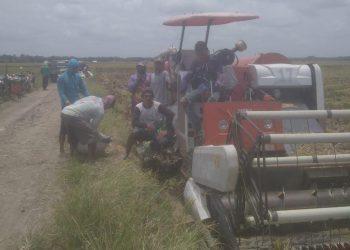 Gambar Panen Padi MT-3, Petani Padi Pandeglang Bersama Distan Banten Tekan Biaya Produksi 11