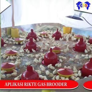 Pemanas Rikte Gas Brooder aplikasi kandang