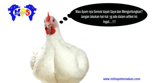 peralatan kandang ayam broiler komplit
