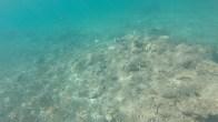A baby shark (top left corner) captured during snorkeling